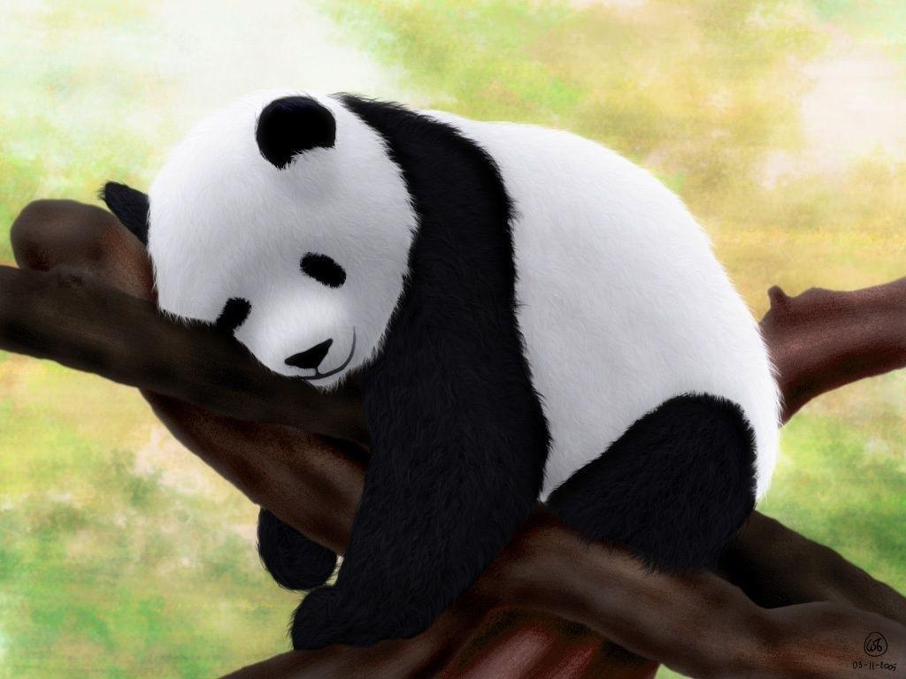 panda wallpapers hd images new 1024×768 cute baby panda wallpapers