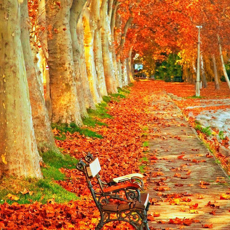 10 Best Autumn Scenery Wallpaper Hd FULL HD 1920×1080 For PC Desktop 2018 free download park autumn scenery in high resolution hd desktop wallpaper 800x800