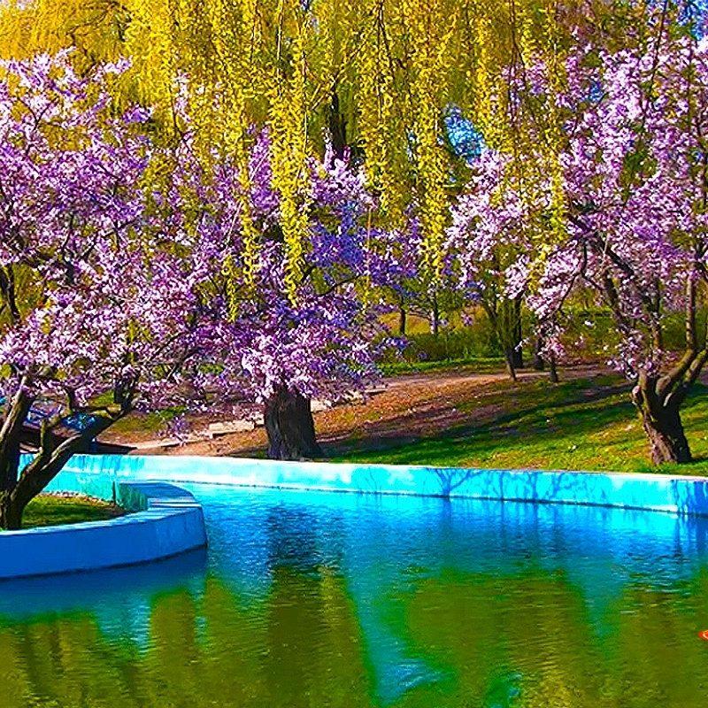 10 New Free Spring Screensavers And Wallpaper FULL HD 1920×1080 For PC Desktop 2020 free download park sakura blossoms screensaver animated desktop wallpaper 800x800