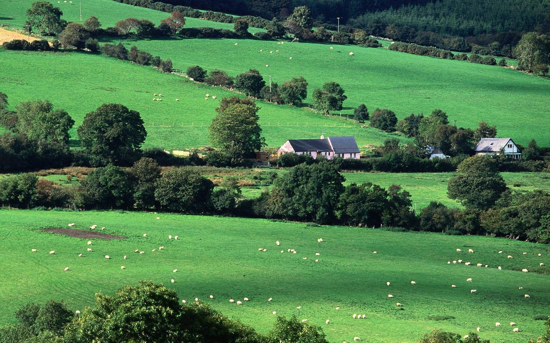 pasture ireland countryside wallpaper | city wallpaper