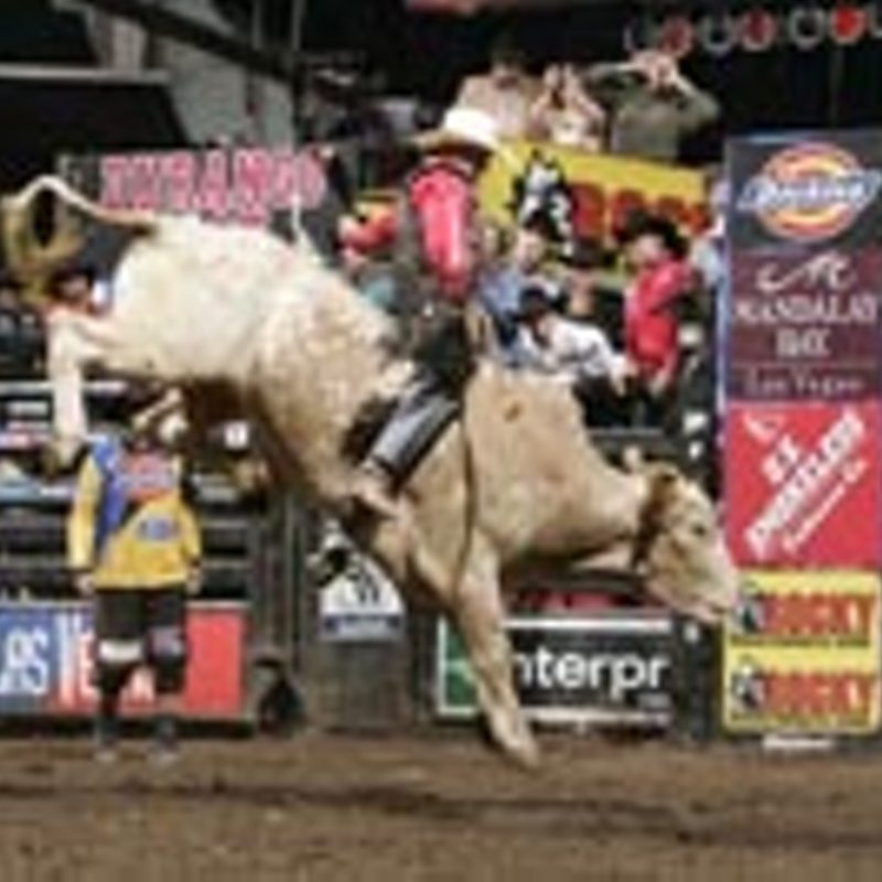 10 Best Professional Bull Riders Inc FULL HD 1920×1080 For PC Background 2021 free download pbr aint just a beer shootin the bull with justin mcbride rec 800x800
