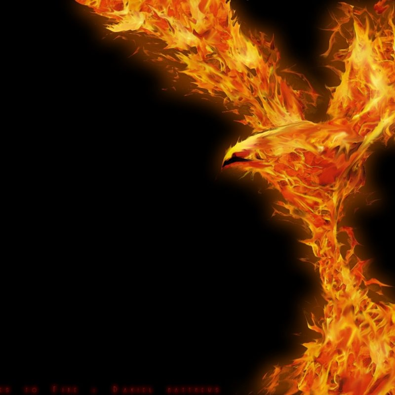 10 New Phoenix Rising From The Ashes Wallpaper FULL HD 1080p For PC Background 2018 free download phoenix ashes to firespud383 on deviantart 800x800