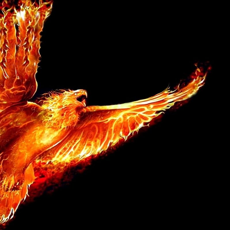 10 New Phoenix Rising From The Ashes Wallpaper FULL HD 1080p For PC Background 2018 free download phoenix bird rising from the ashes google search fantasy 800x800