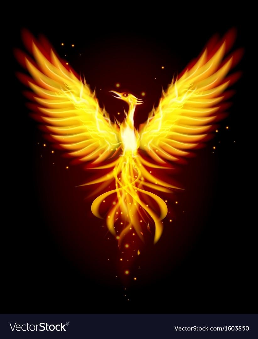 phoenix bird royalty free vector image - vectorstock
