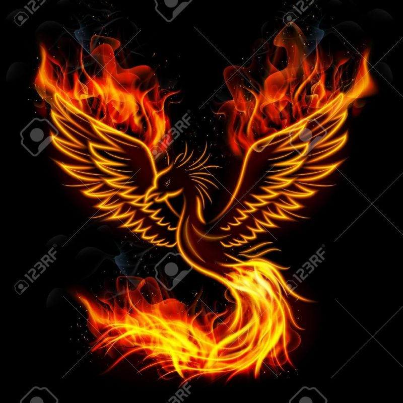 10 Most Popular Pics Of Phoenix Bird FULL HD 1920×1080 For PC Desktop 2018 free download phoenix bird stock photos royalty free phoenix bird images 800x800