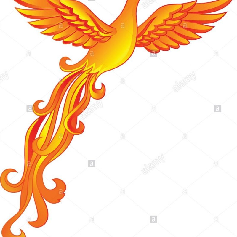 10 Most Popular Pics Of Phoenix Bird FULL HD 1920×1080 For PC Desktop 2018 free download phoenix bird stock vector art illustration vector image 64537283 800x800