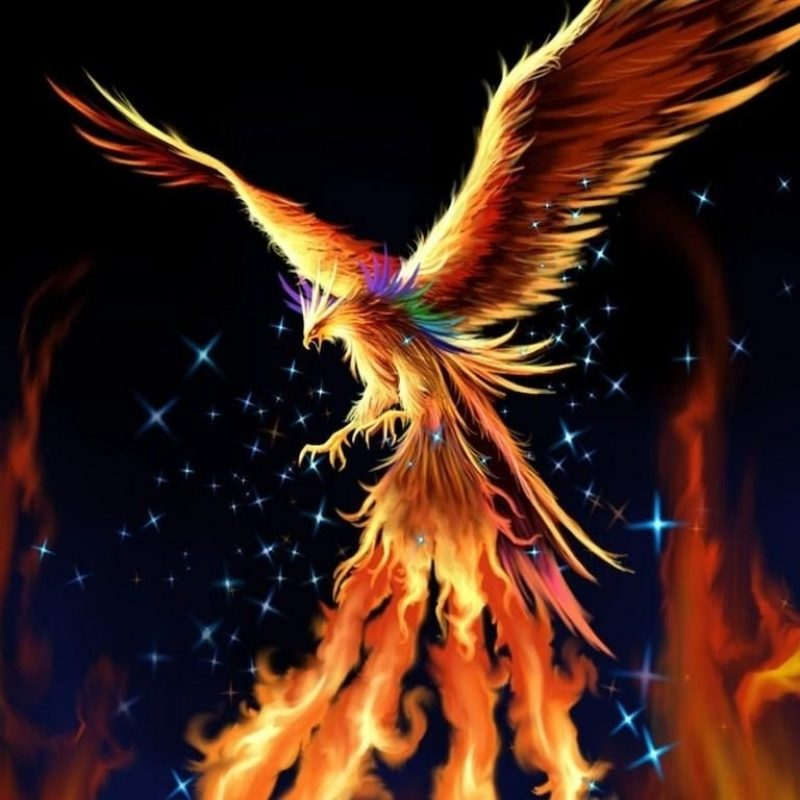 10 New Phoenix Rising From The Ashes Wallpaper FULL HD 1080p For PC Background 2018 free download phoenix live images hd wallpapers bsnscb graphics phoenix and 800x800