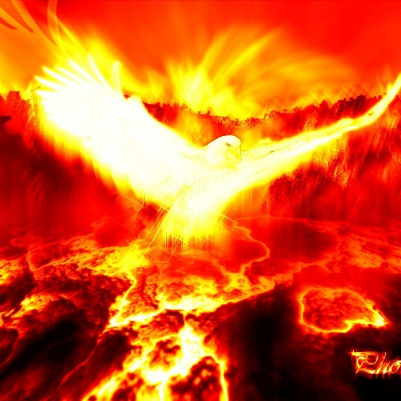 10 New Phoenix Rising From The Ashes Wallpaper FULL HD 1080p For PC Background 2018 free download phoenix pictures phoenix myth bird photos gallery 800x800