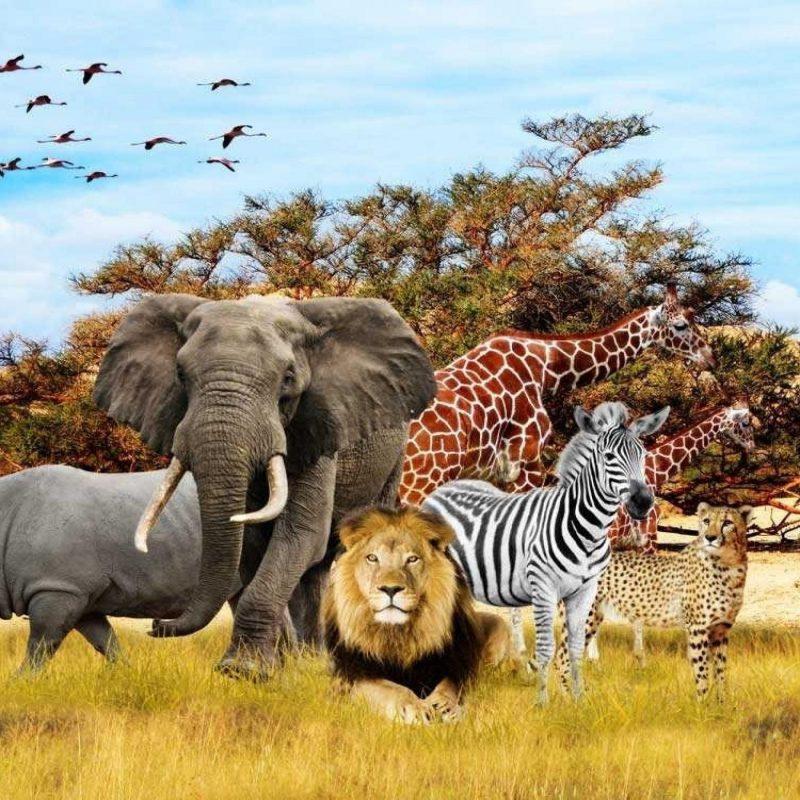 10 Best African Safari Animals Wallpaper FULL HD 1920×1080 For PC Desktop 2020 free download photography id 34556 tierbabys tierkinder wallpapers tiere 800x800