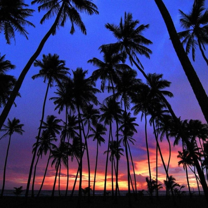 10 Best Palm Trees Wallpaper Hd FULL HD 1080p For PC Background 2018 free download photos for palm tree wallpaper trees hd pics androids wallvie 800x800