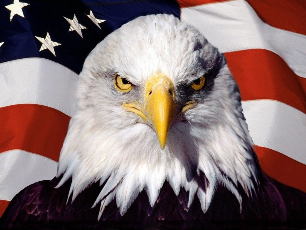 picture fireworks & us flag | pictures, wallpaper eagle and american