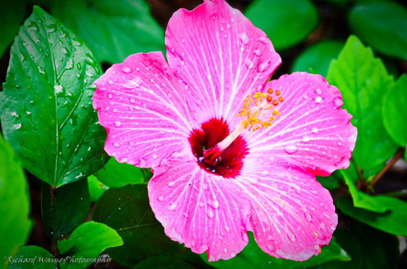 10 Latest Images Of Tropical Flowers FULL HD 1080p For PC Background 2021 free download picture of tropical flowers image 12 800x530