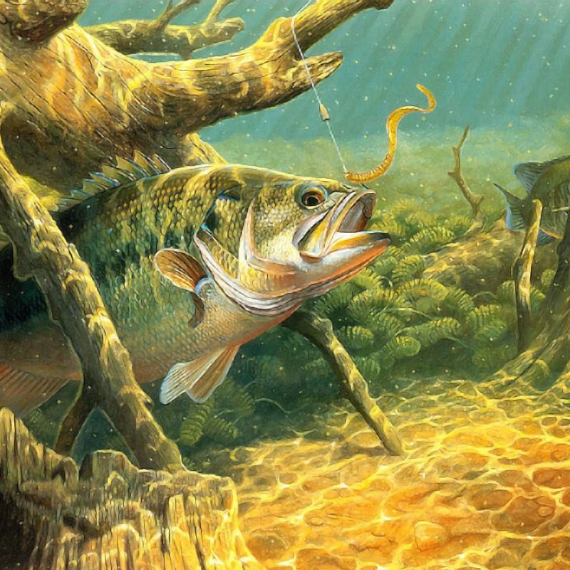 10 Latest Bass Fishing Wallpaper Hd FULL HD 1080p For PC Desktop 2021 free download pictures of bass bass fishing wallpaper fish art pinterest 800x800