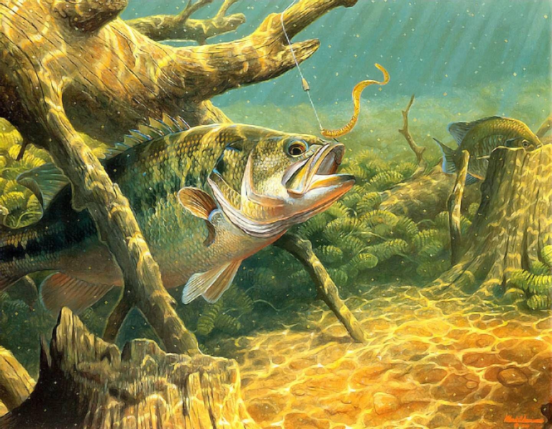 pictures of bass | bass fishing wallpaper | fish art | pinterest