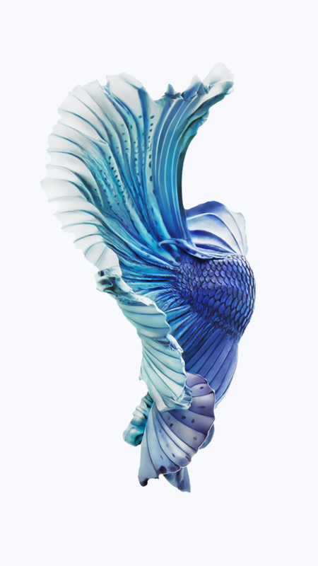 10 Latest Iphone Fish Wallpaper FULL HD 1080p For PC Desktop 2021 free download pin en iphone wallpapers 450x800