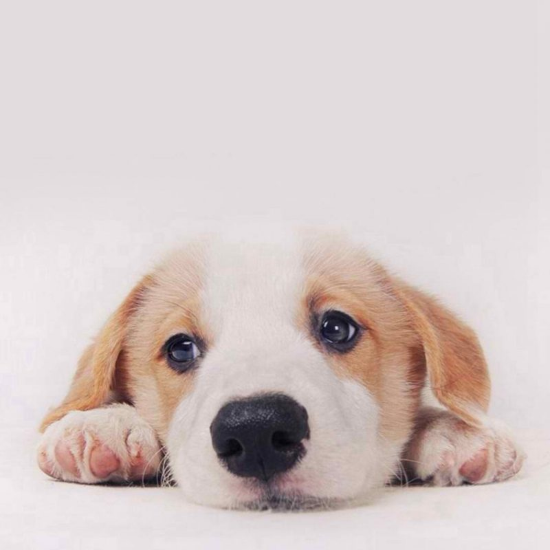 10 Top Dog Wallpaper For Android FULL HD 1080p For PC Background 2018 free download pinalyssa bonifacio on things that make me smile pinterest 800x800