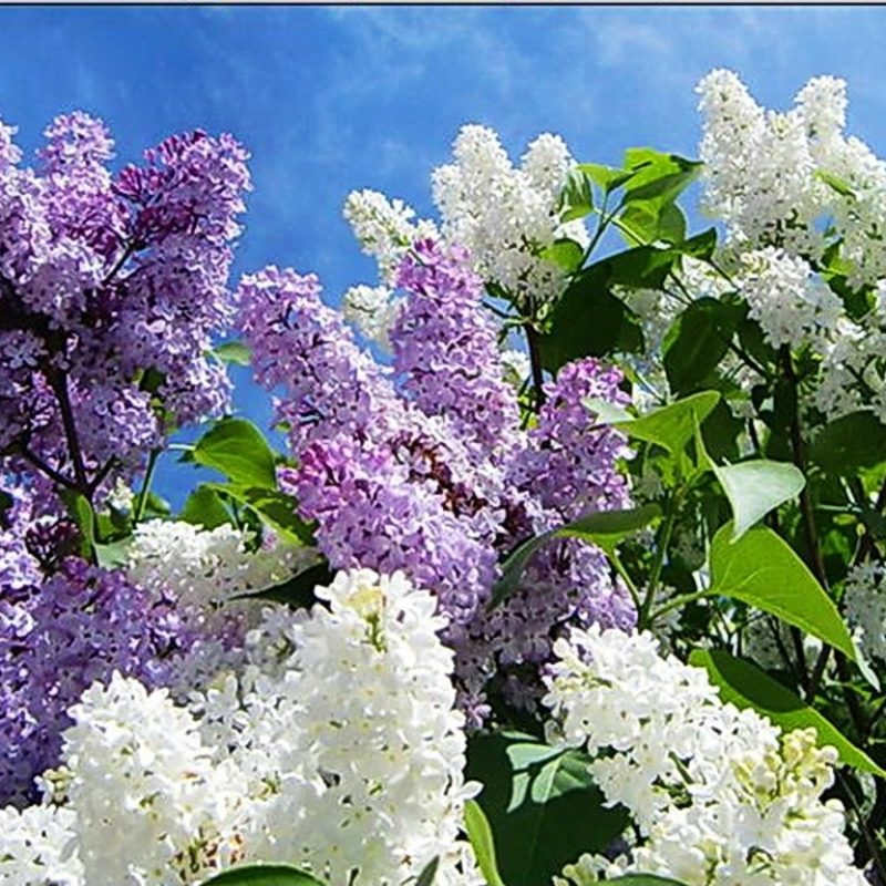 10 New Free Desktop Wallpaper Spring Scenes FULL HD 1080p For PC Background 2021 free download pinamy stoker on spring pinterest live wallpapers spring 800x800