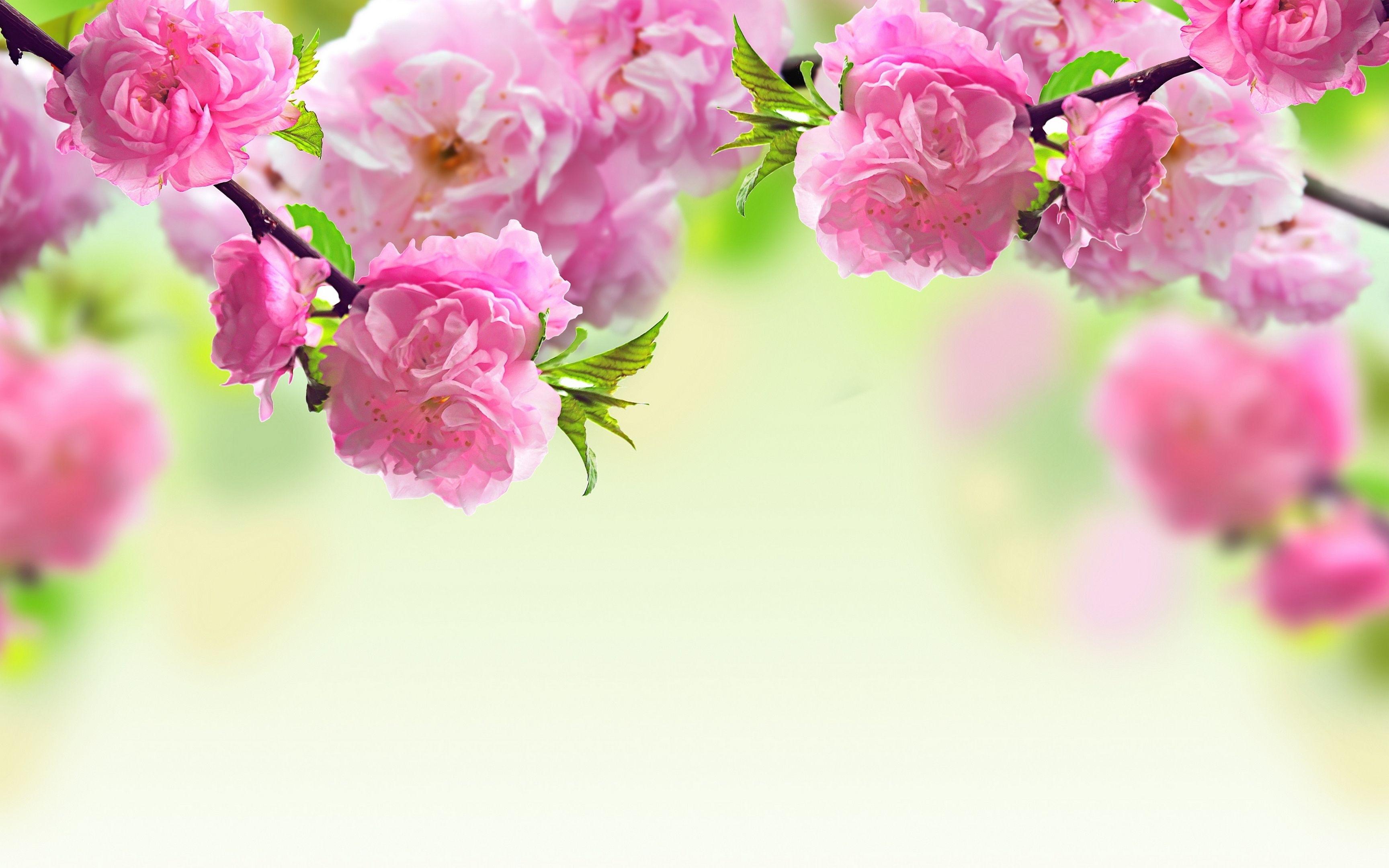 pinjames lee on wallpaper   pinterest   spring flowers, flower