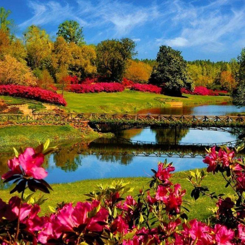 10 Top Free Springtime Desktop Wallpaper FULL HD 1920×1080 For PC Background 2018 free download pinjardineria plantas y flores on jardines y terrazas pinterest 800x800