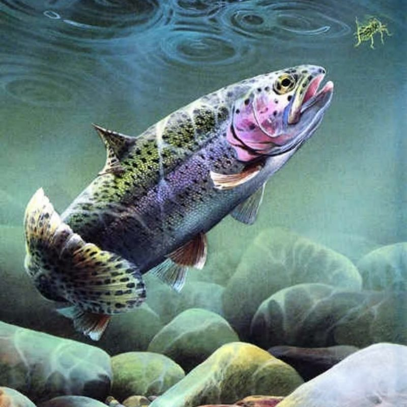 10 New Fly Fishing Iphone Wallpaper FULL HD 1920×1080 For PC Background 2020 free download pinjesi lofink on outdoor s pinterest trout fly fishing and 800x800