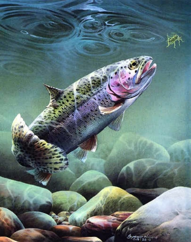 pinjesi lofink on outdoor s | pinterest | trout, fly fishing and