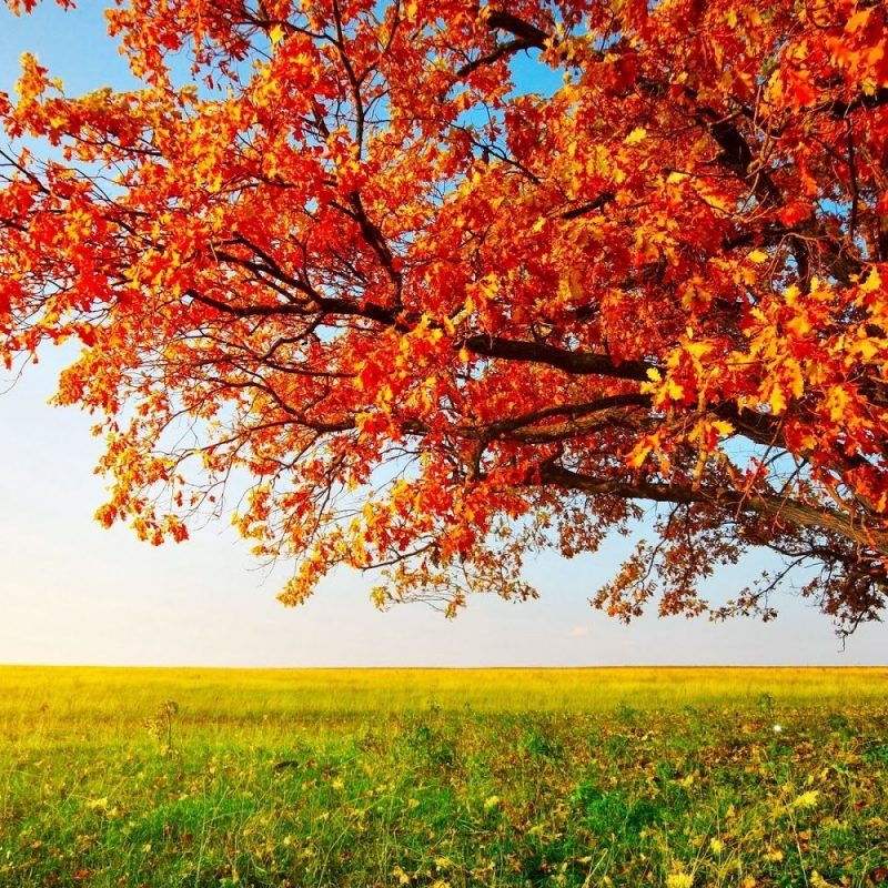 10 Top Fall Trees Desktop Backgrounds FULL HD 1080p For PC Background 2021 free download pinjia ru li on geography pinterest autumn and scenery 800x800