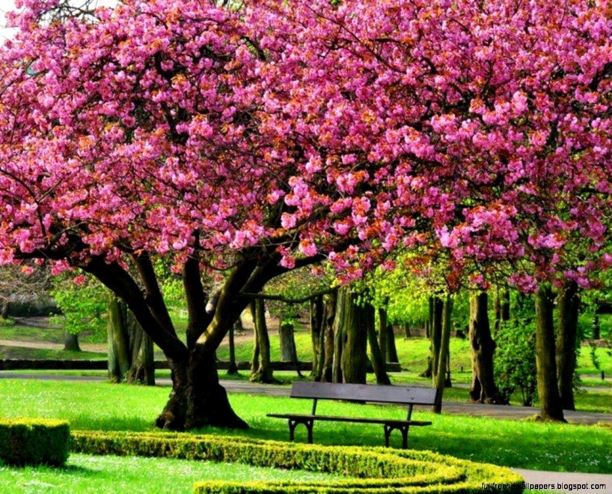 pinjoyce knight on a--trees | pinterest | blossom trees