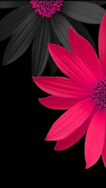 10 Best Black Flower Wallpaper FULL HD 1080p For PC Background 2020 free download pink black flower wallpaper background wallpapers 450x800