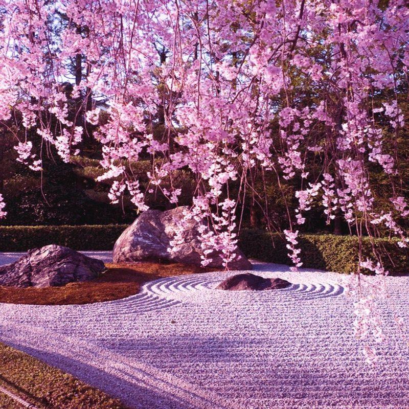 10 Best Cherry Blossom Wallpaper Desktop FULL HD 1080p For PC Desktop 2018 free download pink cherry blossom wallpaper wallpaperlepi 1 800x800