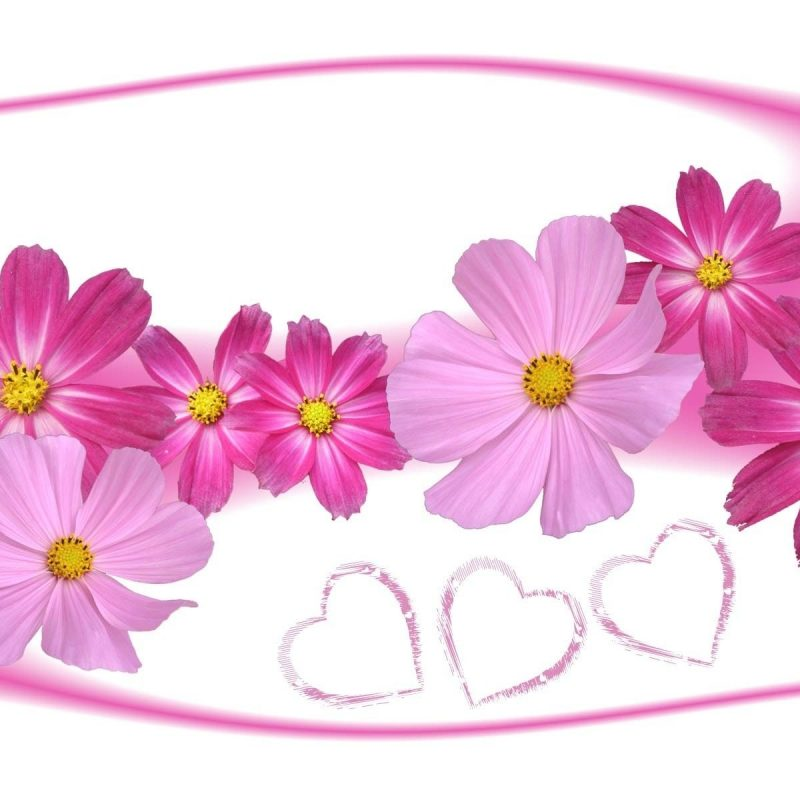 10 Best Pictures Of Flowers And Hearts FULL HD 1920×1080 For PC Background 2018 free download pink cosmos flowers and hearts walldevil 800x800