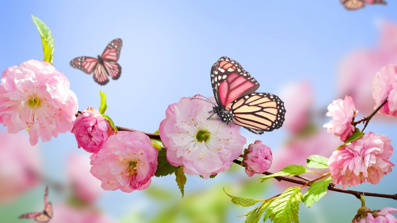 pink flowers blooms and butterfly wallpaper | butterflies