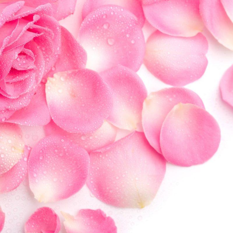 10 Best Pink Rose Background Wallpaper FULL HD 1920×1080 For PC Desktop 2018 free download pink rose background wallpaper 07151 baltana 800x800