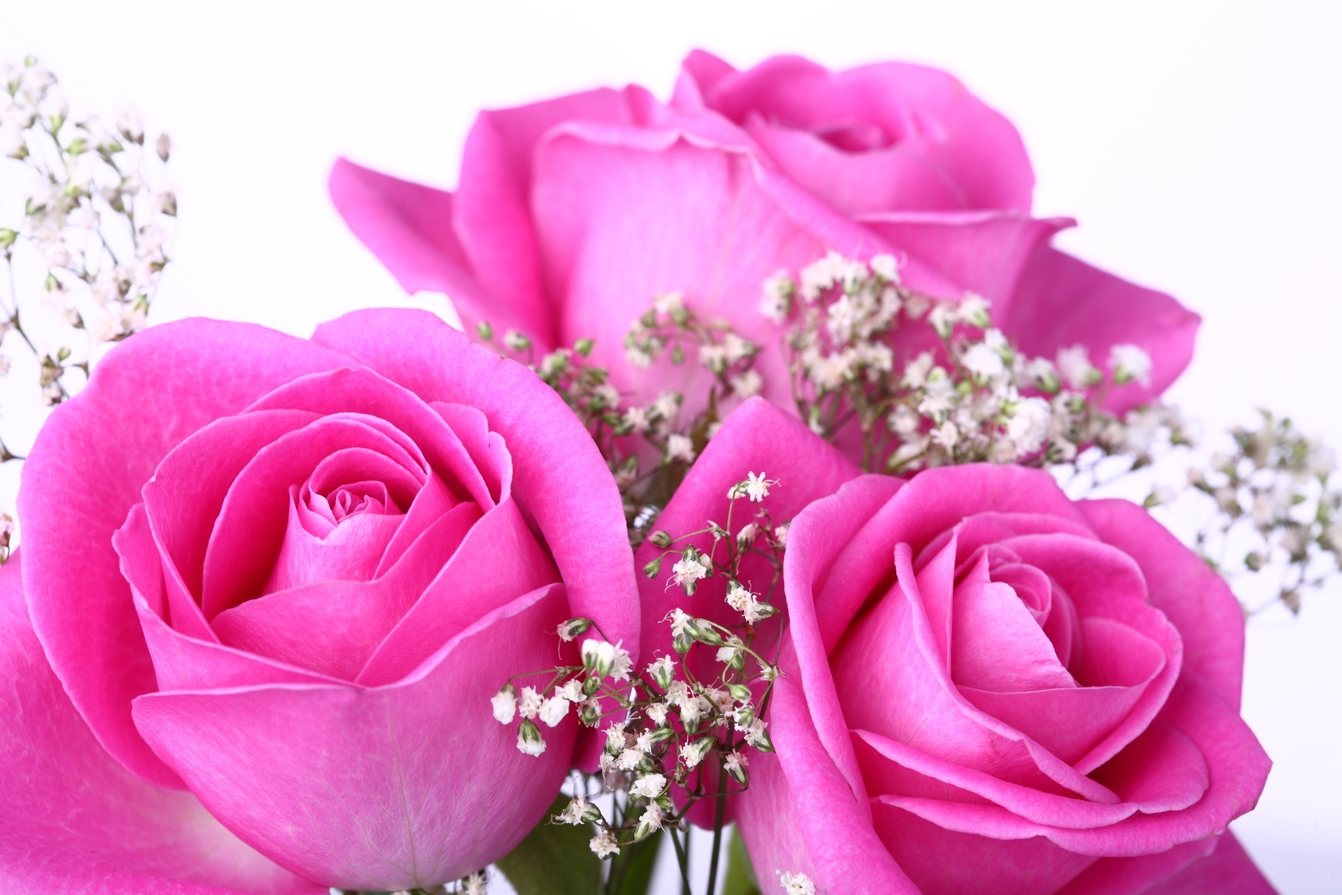 pink rose photos flower images hd of laptop pics roses pictures