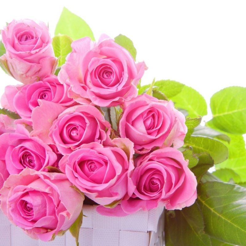 10 New Rose Wallpapers Free Download FULL HD 1920×1080 For PC Background 2018 free download pink rose wallpapers hd pictures flowers one hd wallpaper 800x800