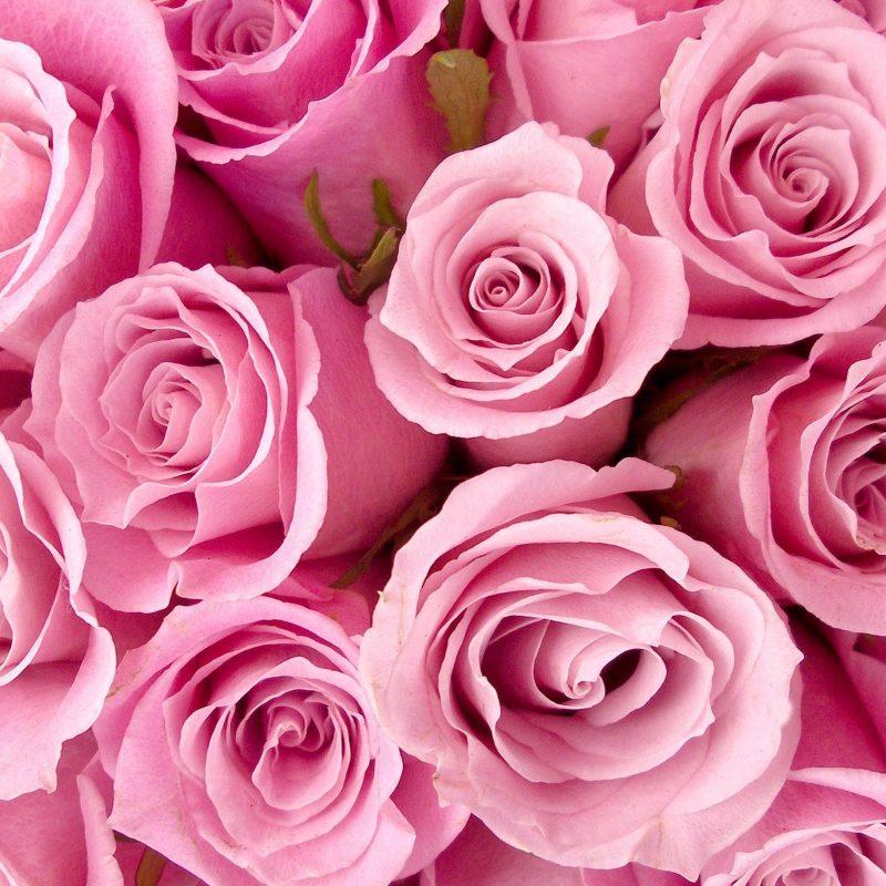 10 Best Pink Rose Background Wallpaper FULL HD 1920×1080 For PC Desktop 2018 free download pink roses background wallpaper pink rose backgrounds wallpaper 800x800