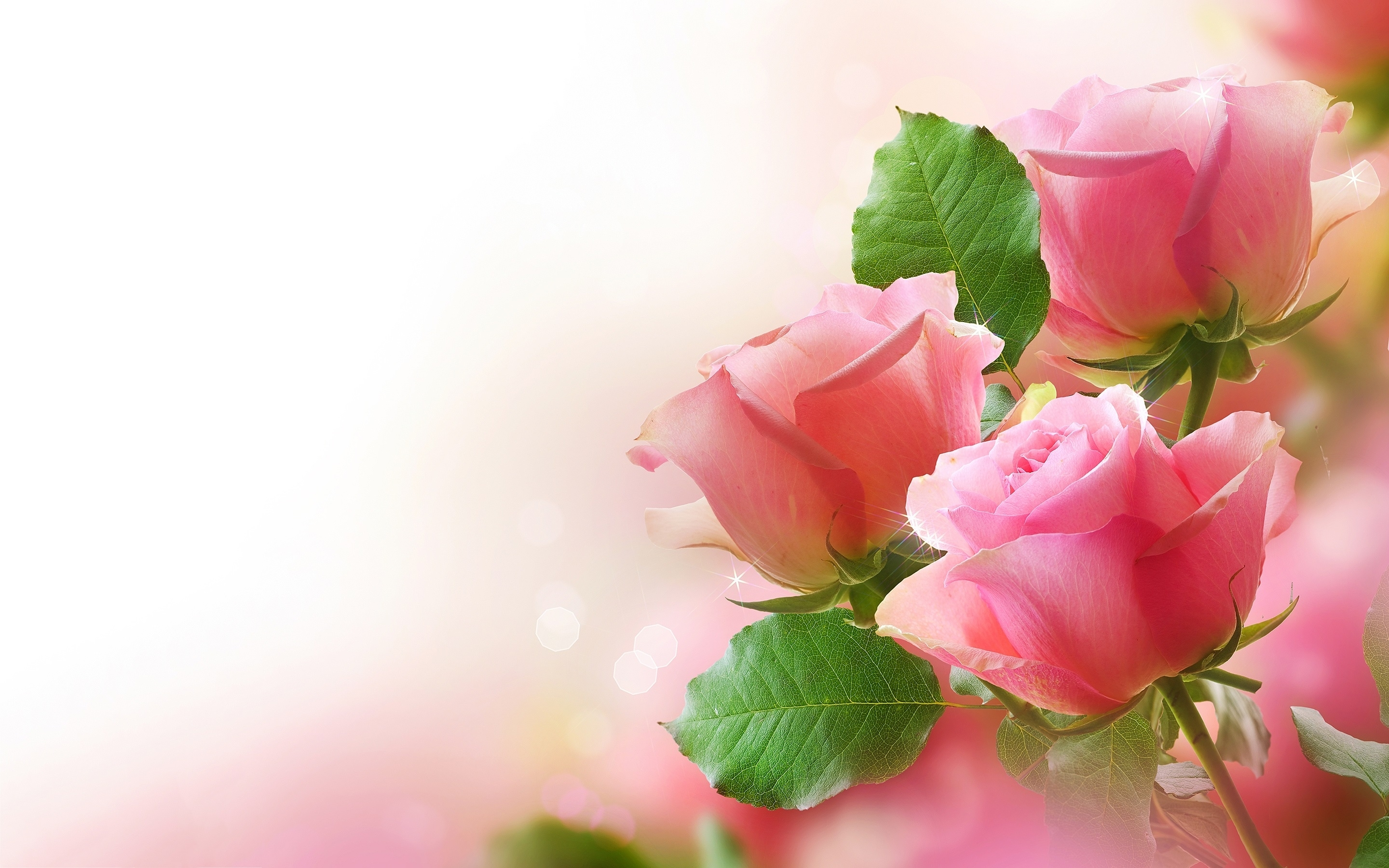 pink roses wide background wallpaper - download hd pink roses wide