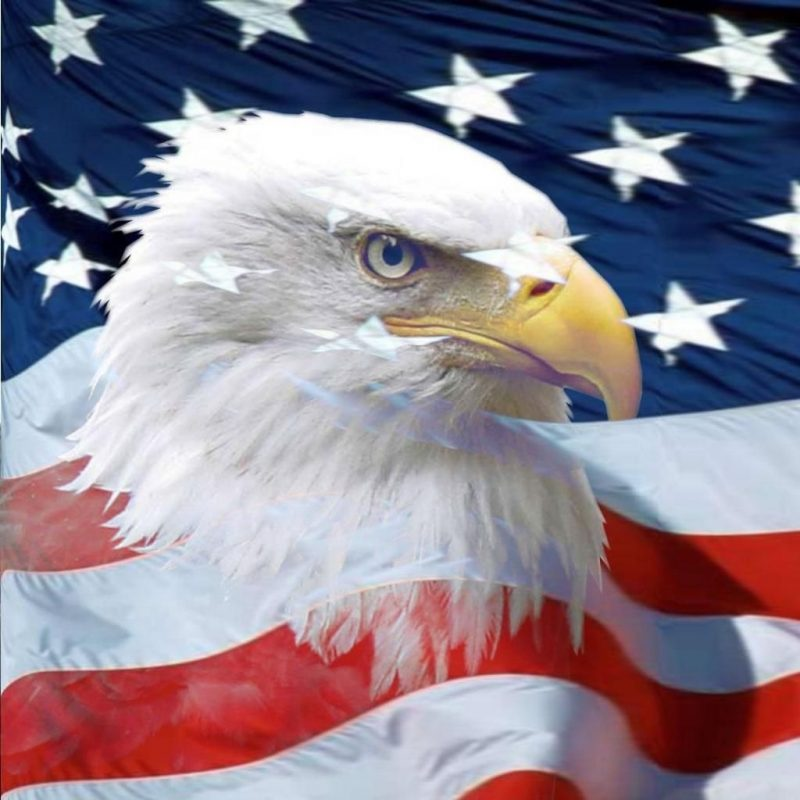 10 Latest Usa Flag Eagle Wallpaper FULL HD 1920×1080 For PC Background 2020 free download pintina bear on wallpaper pinterest bald eagle eagle and 800x800