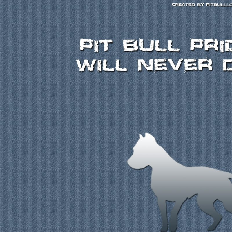 10 Best Pit Bull Screen Savers FULL HD 1080p For PC Background 2018 free download pit bull wallpapers and desktop backgrounds wallpapers pinterest 800x800