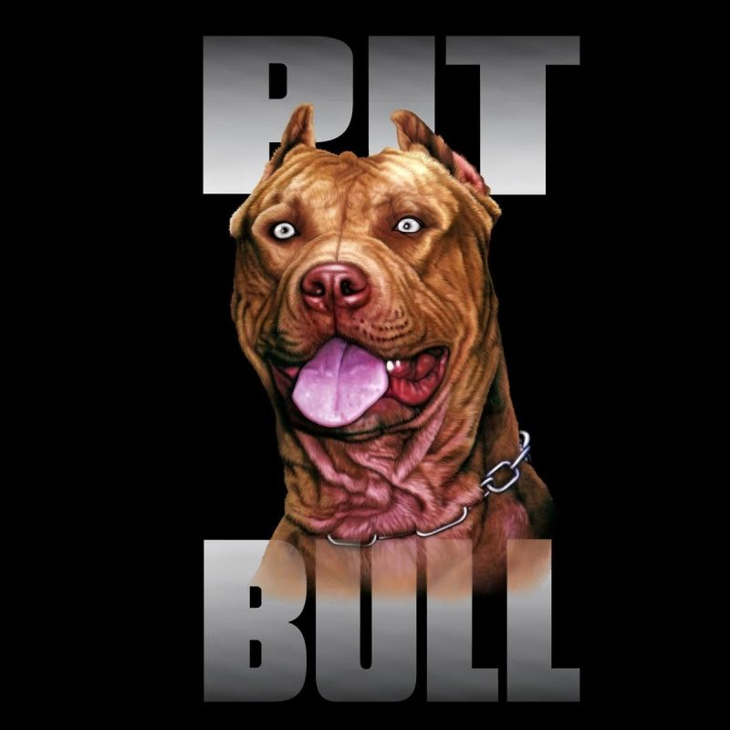 10 Best Pit Bull Screen Savers FULL HD 1080p For PC Background 2018 free download pitbull dog wallpapers wallpaper hd wallpapers pinterest wallpaper 800x800
