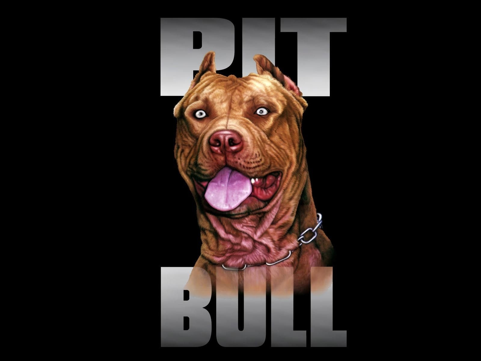 pitbull dog wallpapers wallpaper | hd wallpapers | pinterest | wallpaper