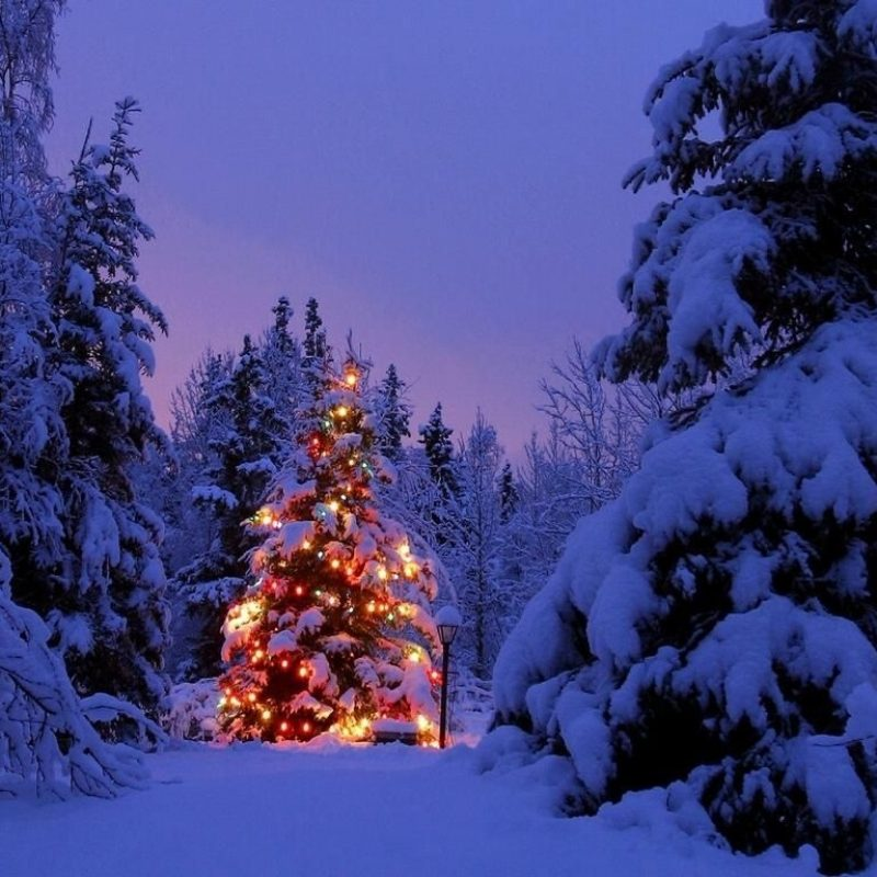 10 Most Popular Snowy Christmas Scenes Photos FULL HD 1920×1080 For PC Background 2021 free download pretty christmas pictures free snowy christmas tree wallpaper 800x800