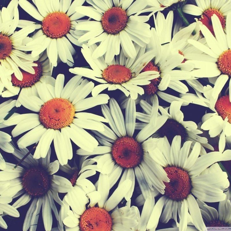 10 Best Pretty Pictures For Wallpaper FULL HD 1080p For PC Background 2020 free download pretty flowers e29da4 4k hd desktop wallpaper for 4k ultra hd tv e280a2 wide 1 800x800