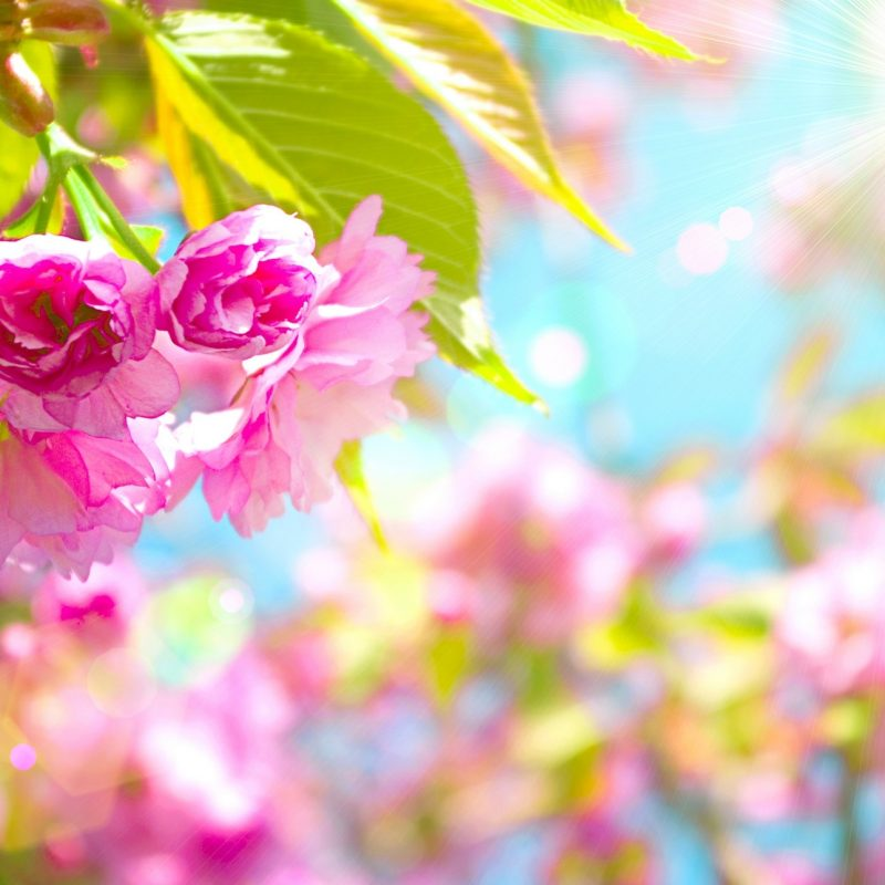 10 Most Popular Spring Wallpapers For Desktop FULL HD 1080p For PC Background 2018 free download pretty spring computer wallpaper 54 images 800x800