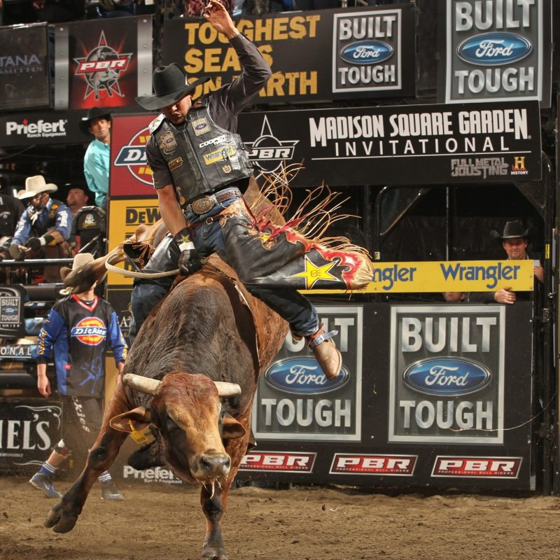 10 Best Professional Bull Riders Inc FULL HD 1920×1080 For PC Background 2021 free download professional bull riding pbr returns to madison square garden in 2013 800x800