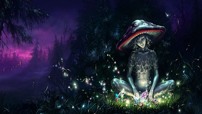 10 Top Magic Mushroom Wallpaper FULL HD 1080p For PC Background 2020 free download psychedelic mushrooms wallpapers wallpaper cave 800x452