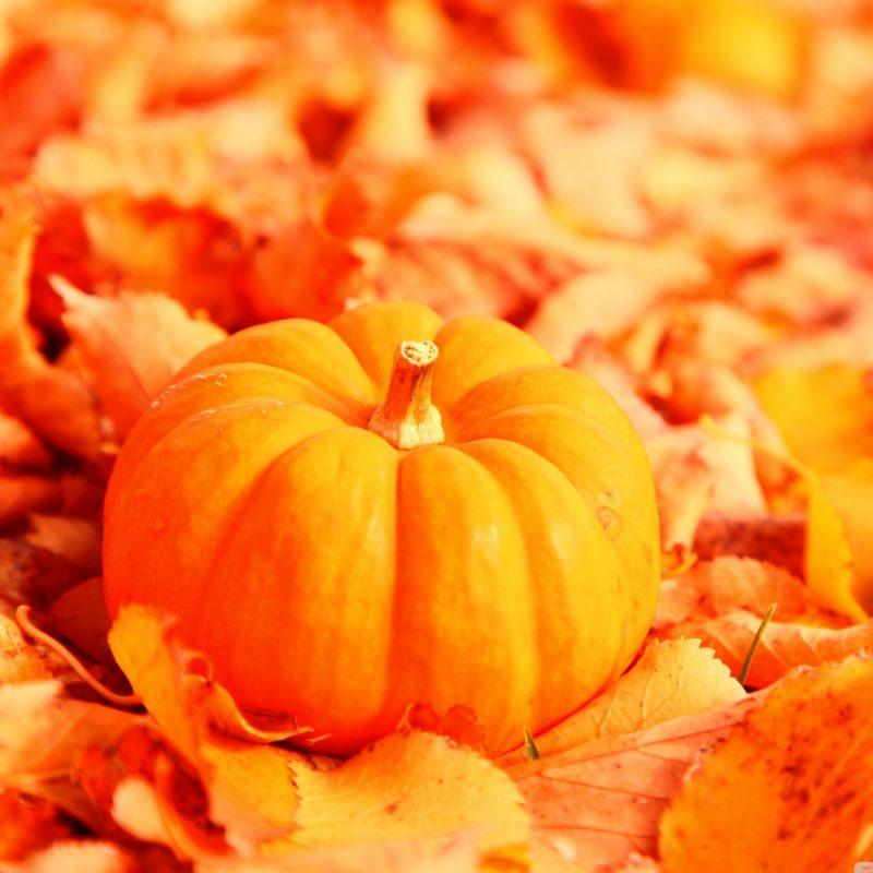 10 Top Fall Pumpkin Wallpaper Hd FULL HD 1920×1080 For PC Background 2018 free download pumpkin and autumn leaves e29da4 4k hd desktop wallpaper for 4k ultra hd 1 800x800