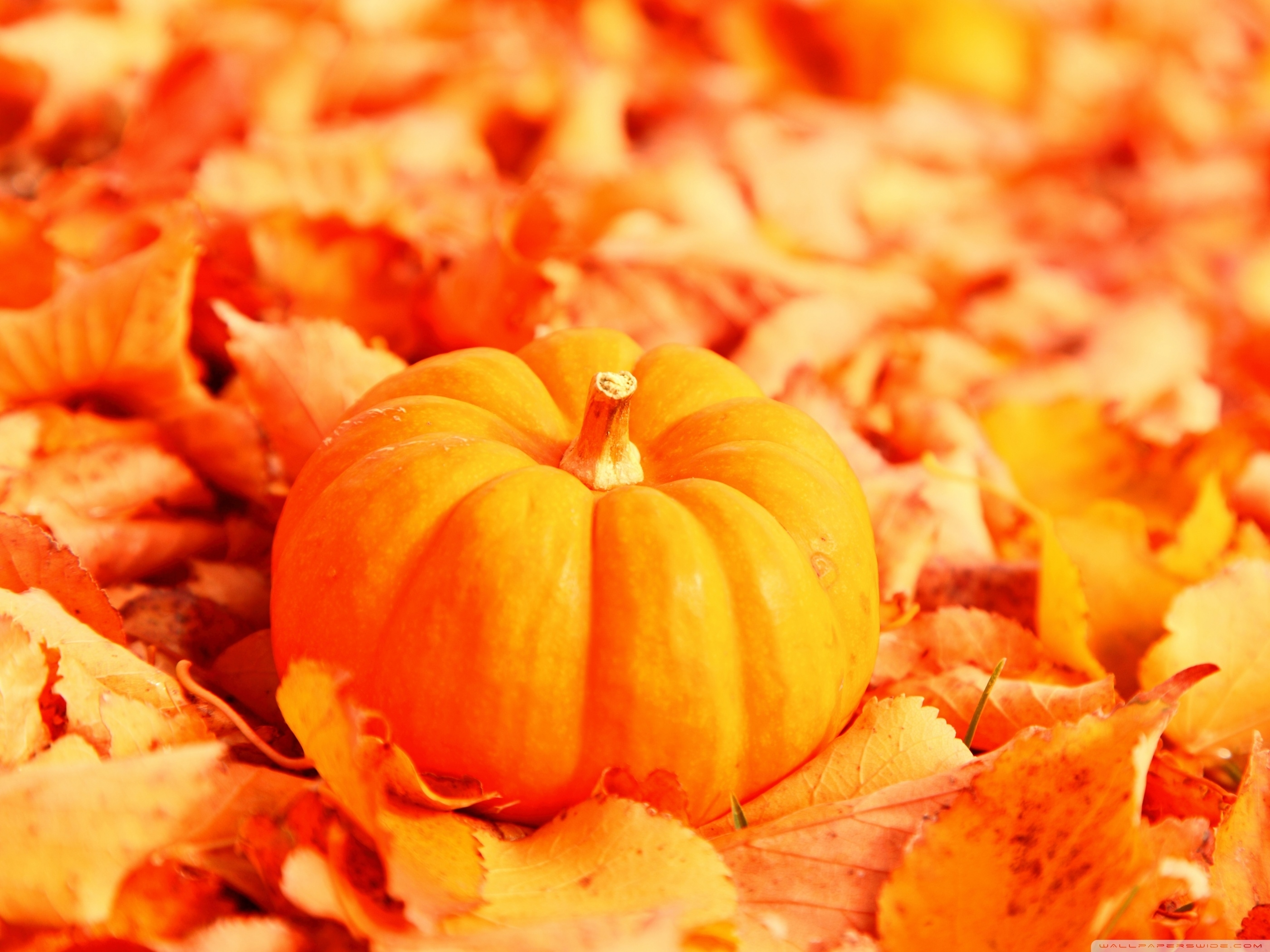 pumpkin and autumn leaves ❤ 4k hd desktop wallpaper for 4k ultra hd