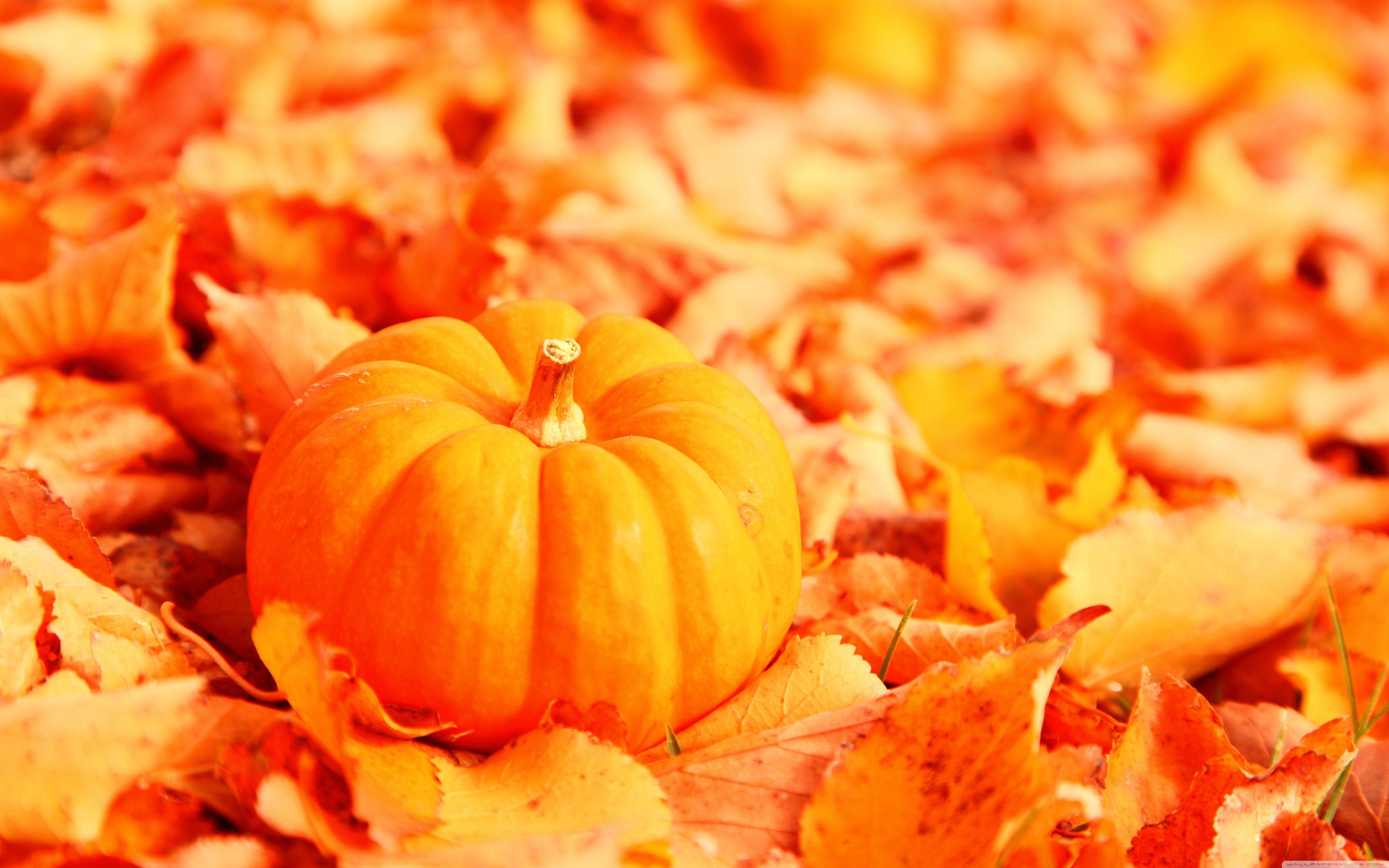 pumpkin and autumn leaves ❤ 4k hd desktop wallpaper for 4k ultra hd