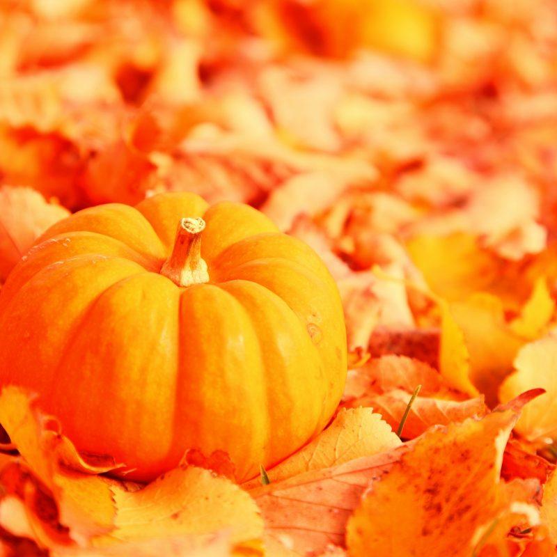 10 New Autumn Pumpkin Desktop Wallpaper FULL HD 1920×1080 For PC Background 2018 free