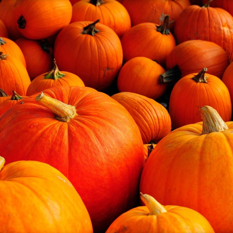 10 Most Popular Pumpkin Desktop Backgrounds Hd FULL HD 1920×1080 For PC Desktop 2018 free download pumpkin in high quality hd desktop wallpaper instagram photo 1 800x800